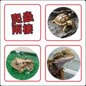 爬蟲兩棲用品專區(只限網店)